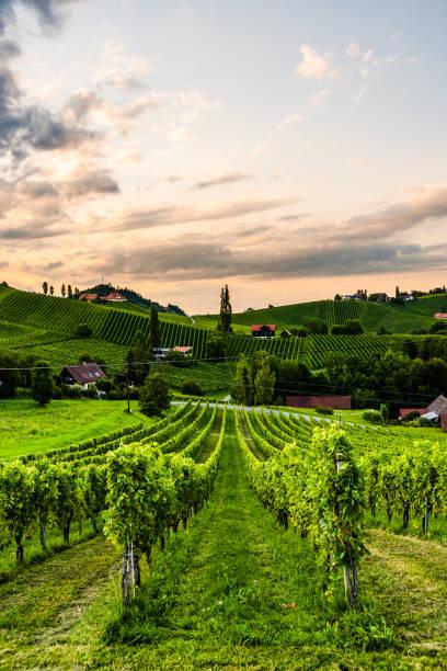 traubenhügel und berge blickvon der weinstraße in der steiermark , österreich ( sulztal weinstrasse ) im sommer. - österreichische kultur stock-fotos und bilder