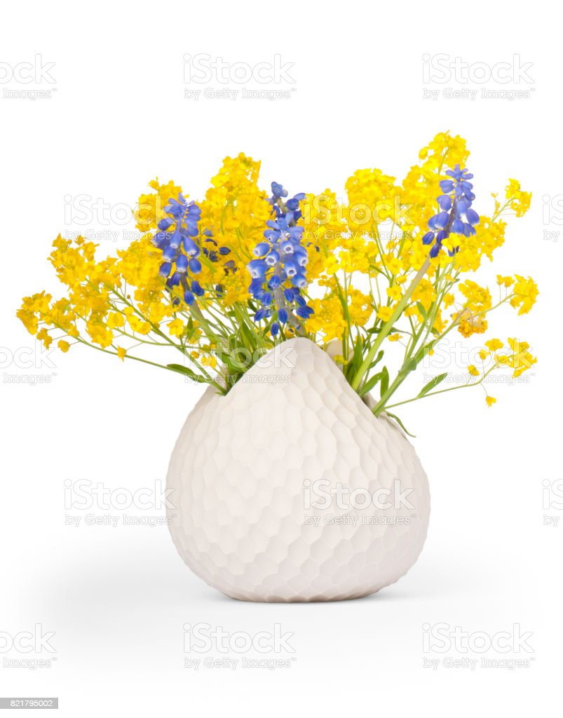 Grape Hyacinths and Basket of Gold stock photo