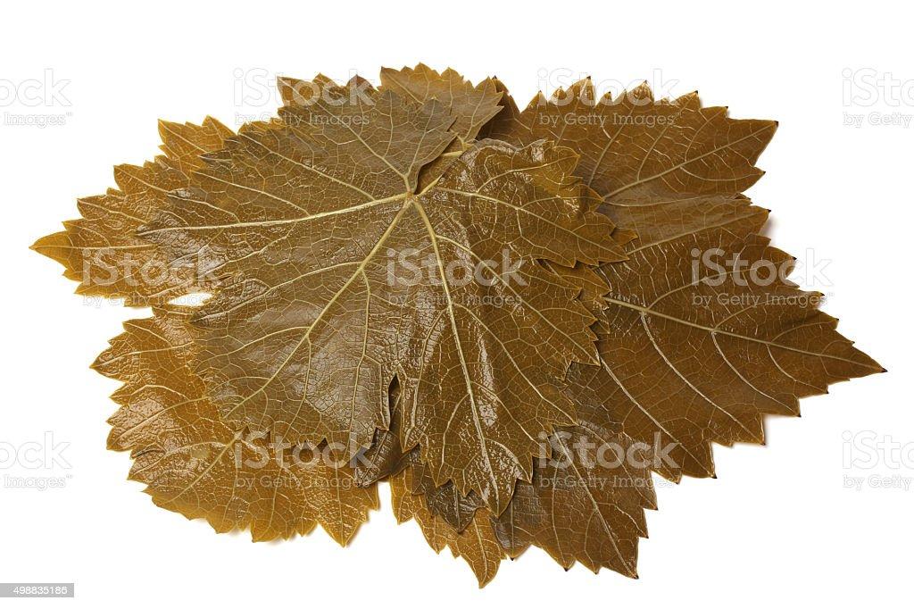 Grape leaves stock photo