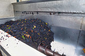 Grape processing on the crusher machine