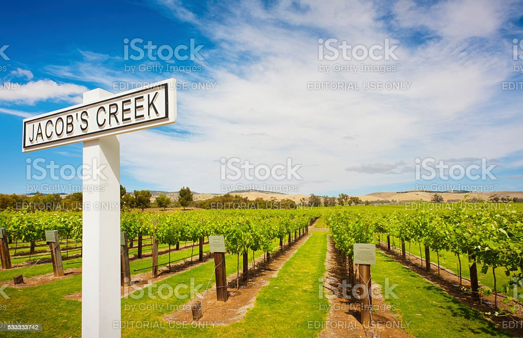 Grape Vines at Jacobs Creek Winery stock photo