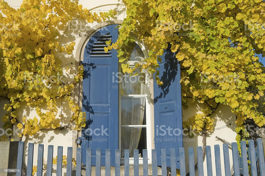 Grape Vines at the window in autumn royalty-free stock photo