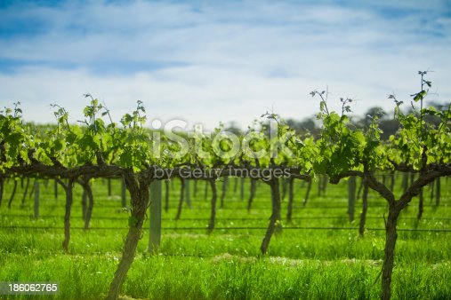 A sunny day in the beautiful Barossa Valley in South Australia.