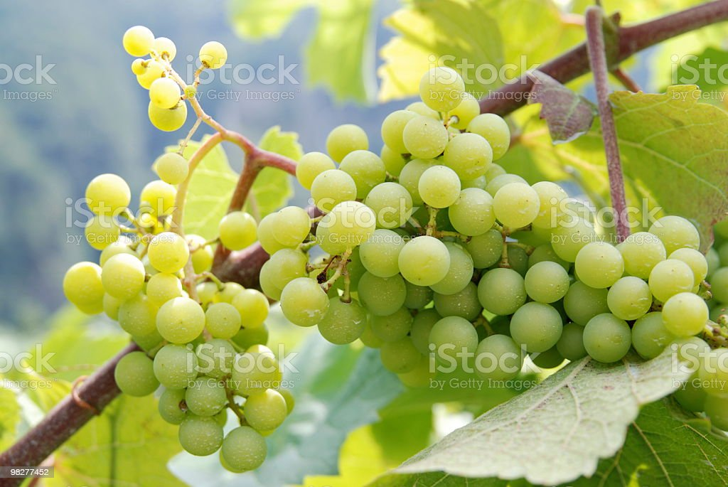 grape with pesticides royalty-free stock photo