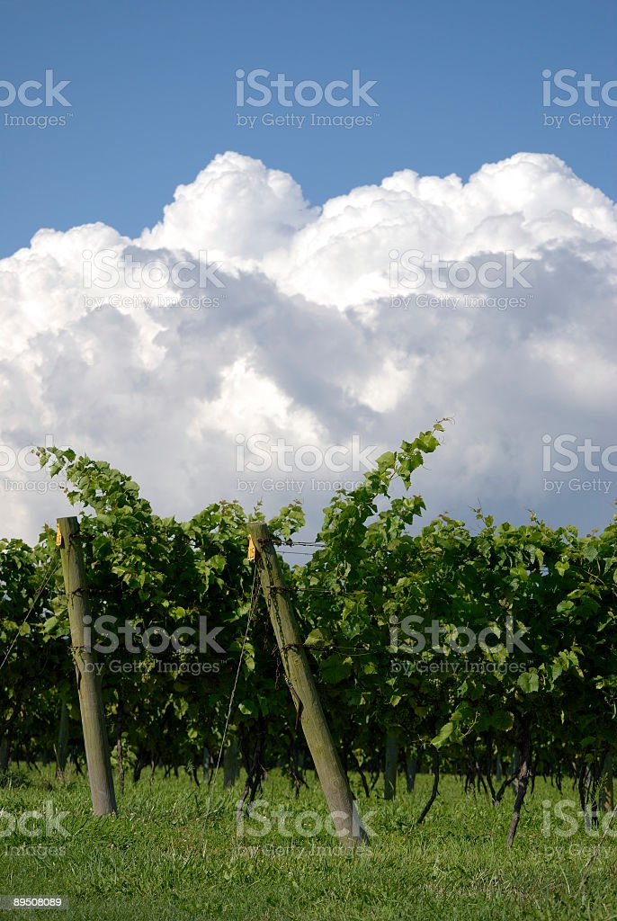 Grapes and clouds royalty-free stock photo