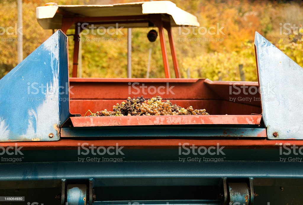 Grapes and Tractor royalty-free stock photo