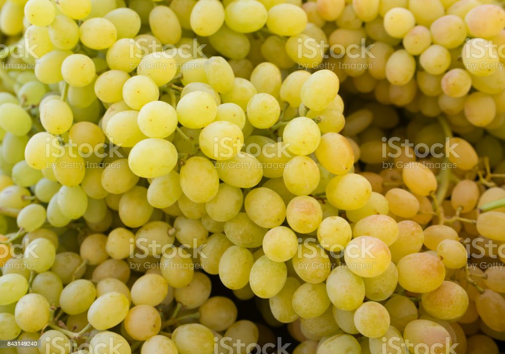 Grapes. Bunches of green grapes. Grapes on a tray agriculture market. (Selective focus) stock photo