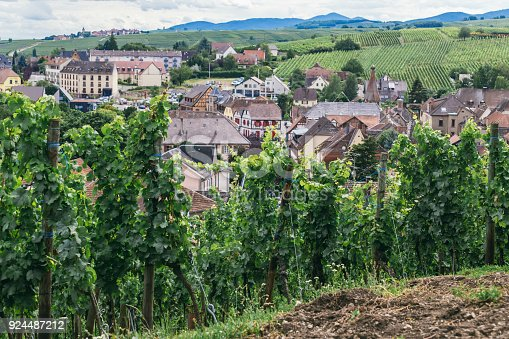 924487256 istock photo grapes grows in rows in the fields of Burgundy, winemaking business in France, fresh green background 924487212