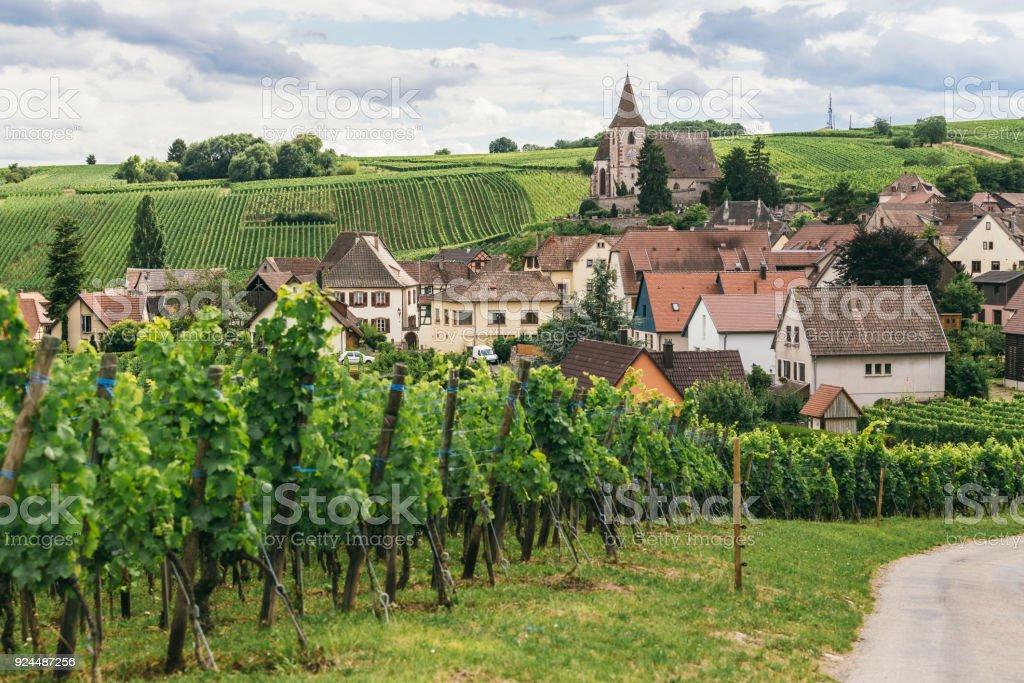 raisins se développe dans les rangées dans les domaines de la Bourgogne, entreprise de vinification en France, fond vert frais - Photo