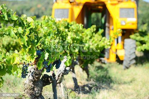 istock grapes harvesting mechanical machine vehicle in a vineyard during harvest wine season 929870052