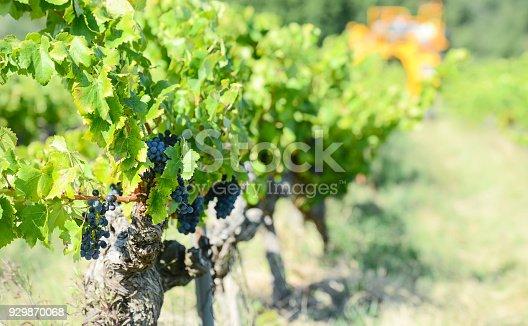 istock grapes harvesting mechanical machine vehicle in a vineyard during harvest wine season 929870068