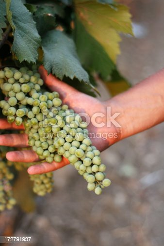 istock grapes in hand 172791937