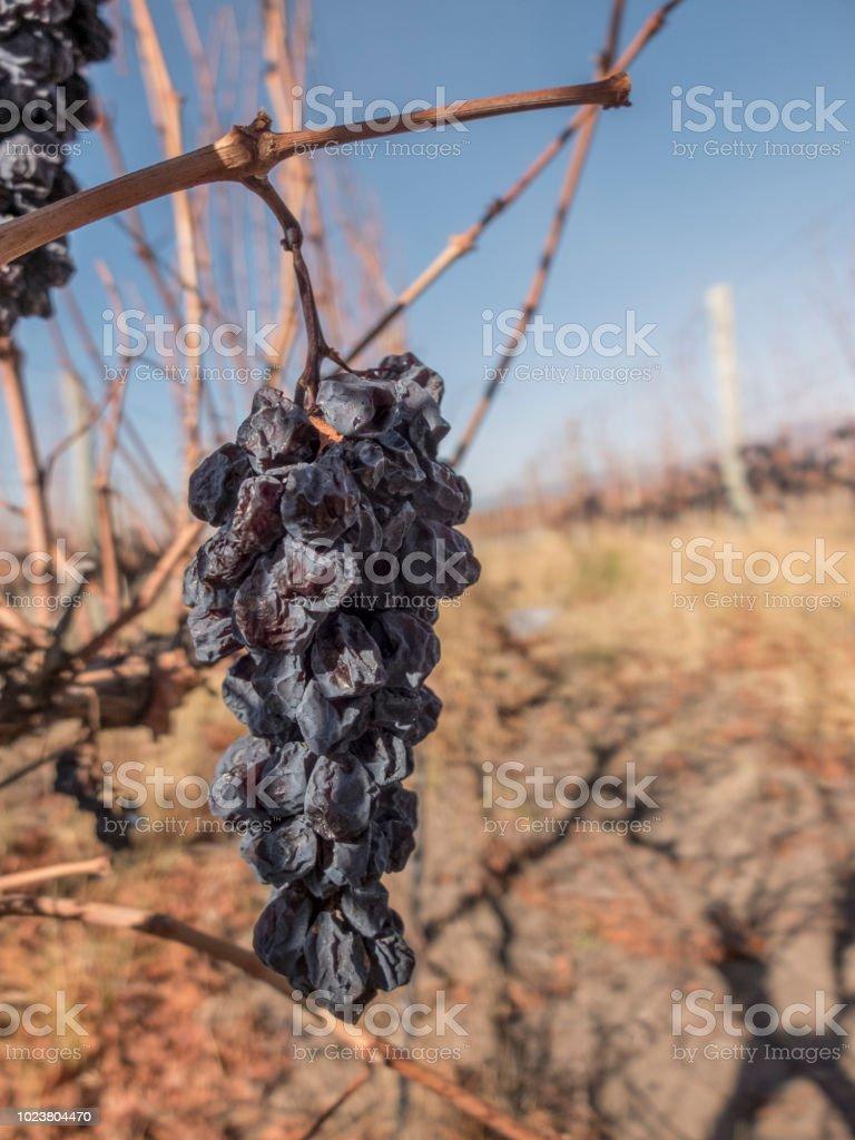 Uvas - foto de stock