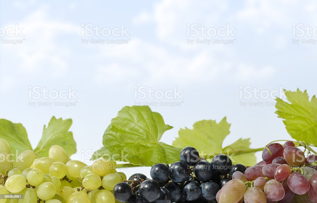 Grapes with Blue Sky royalty-free stock photo