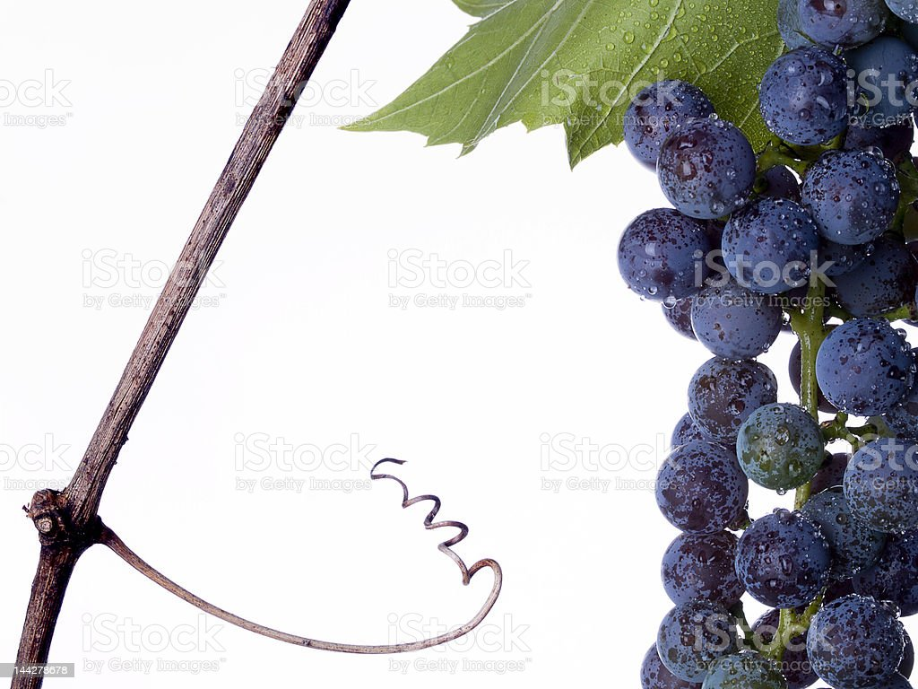 Grapes with Tendril royalty-free stock photo