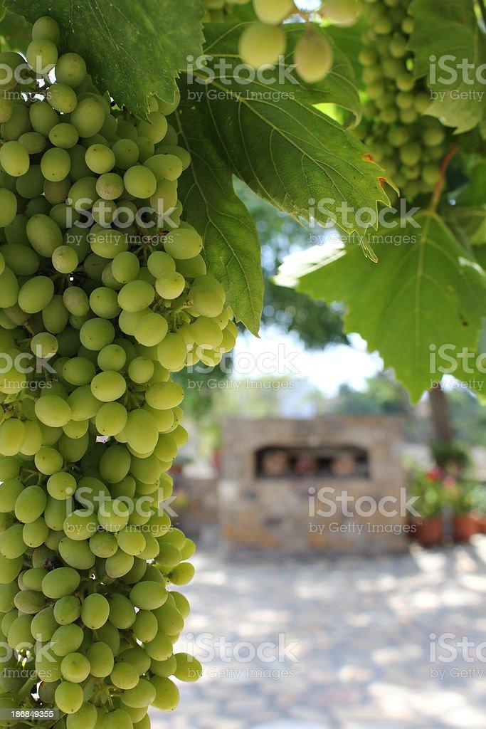 Grapevine – Foto