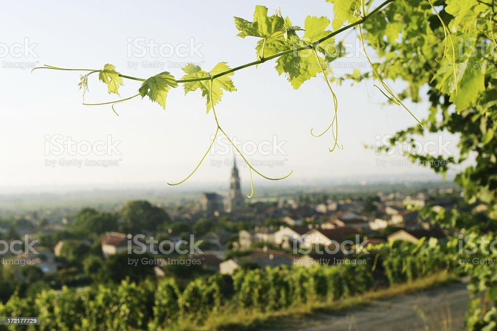 Grapevine & Village stock photo