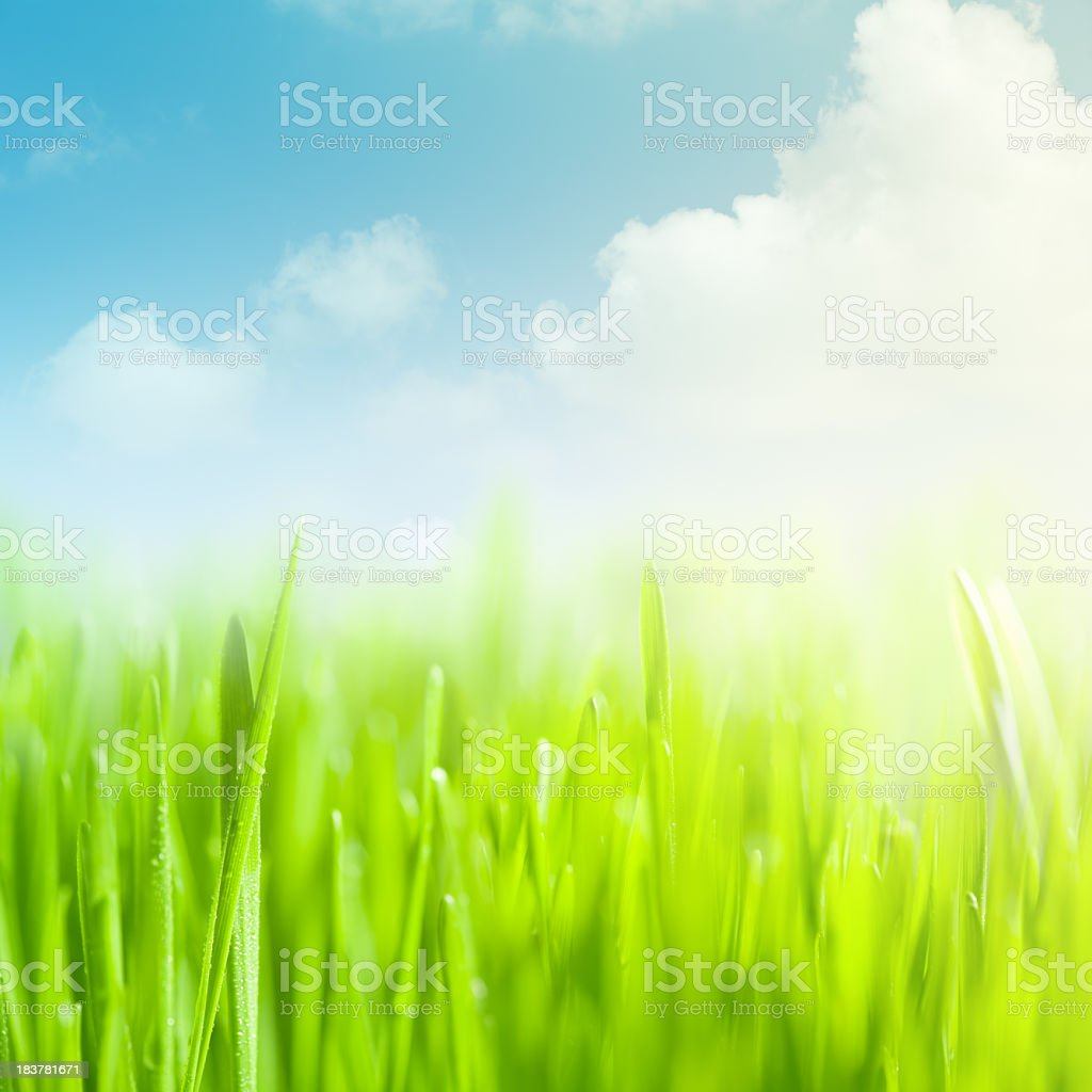 Graphic illustration of a field of green grass and blue sky royalty-free stock photo