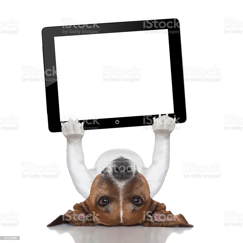 Graphic of a dog lying supine while holding up a tablet stock photo