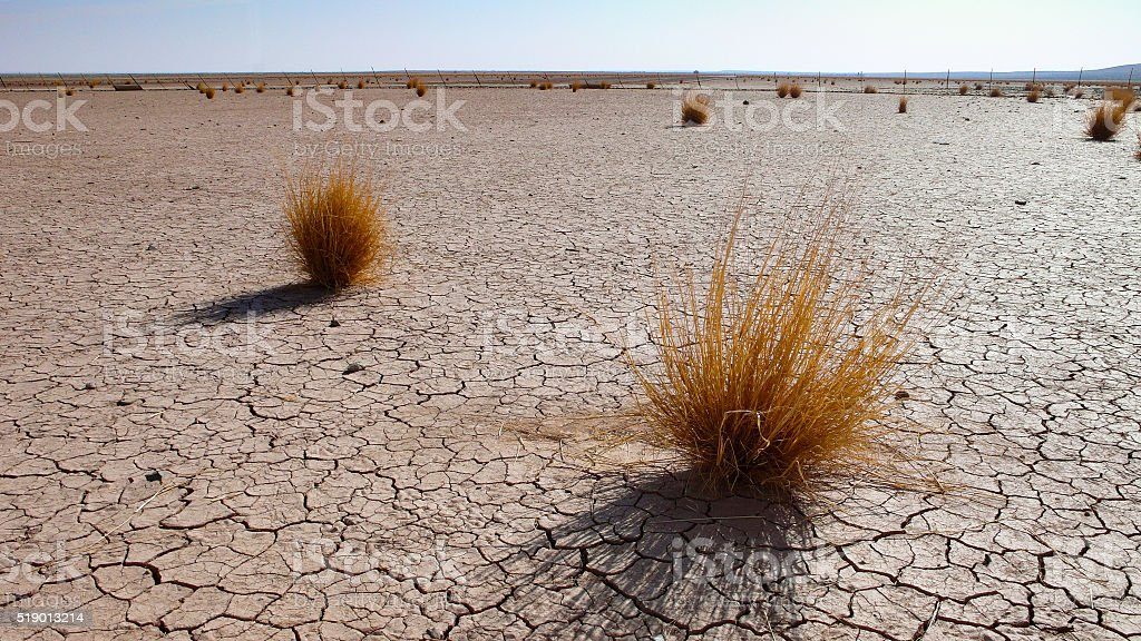 gras bushes in the desert stock photo