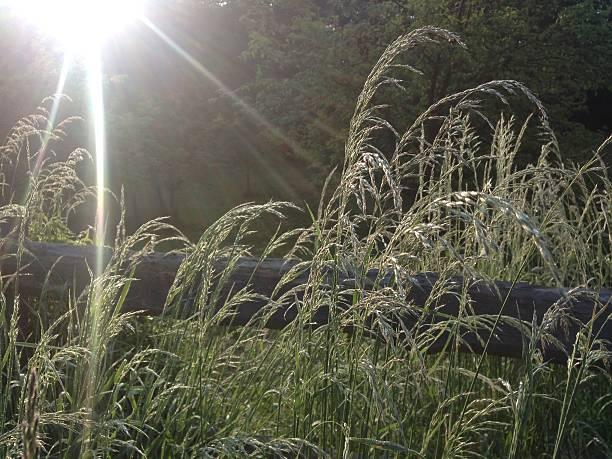 Gras im back machine – Foto