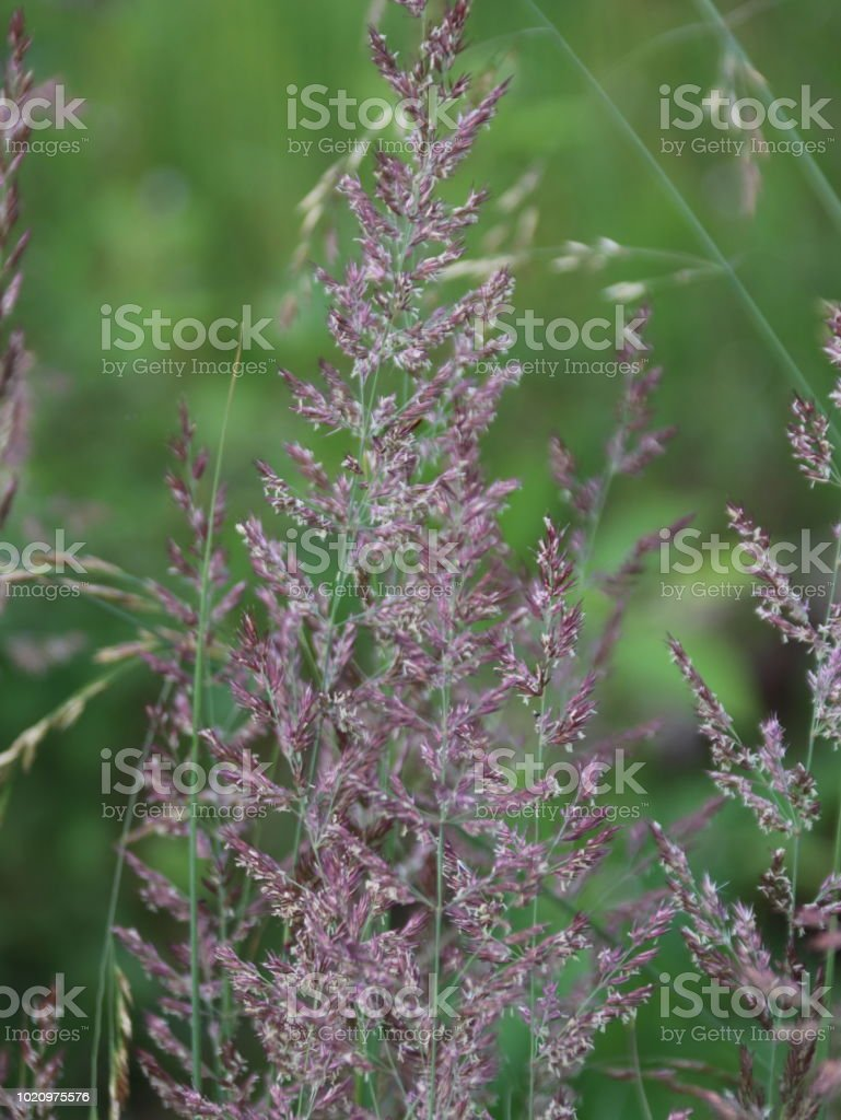 Gras stock photo