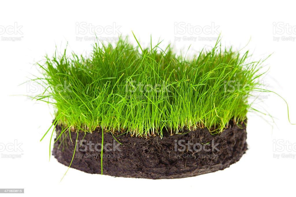 Gras turf circle royalty-free stock photo
