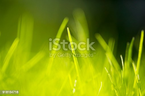513070488 istock photo Grass Abstract Background 918154718