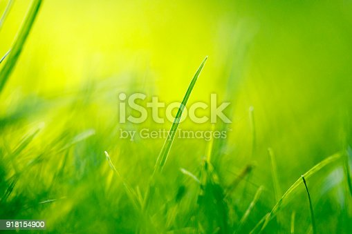 513070488 istock photo Grass Abstract Background 918154900