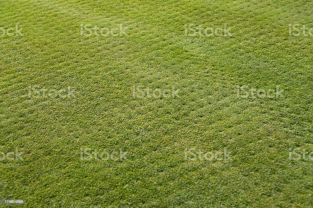 Grass Aeration stock photo