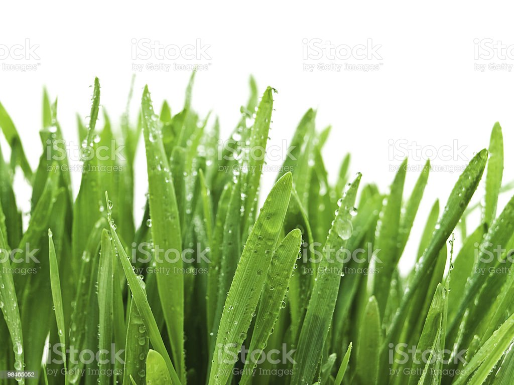 grass after rain royalty-free stock photo