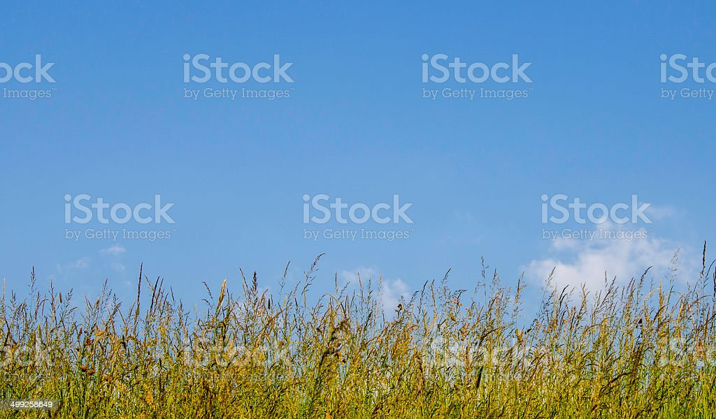 Grass and blue sky royalty-free stock photo