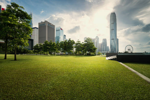 Gras und die Stadt – Foto