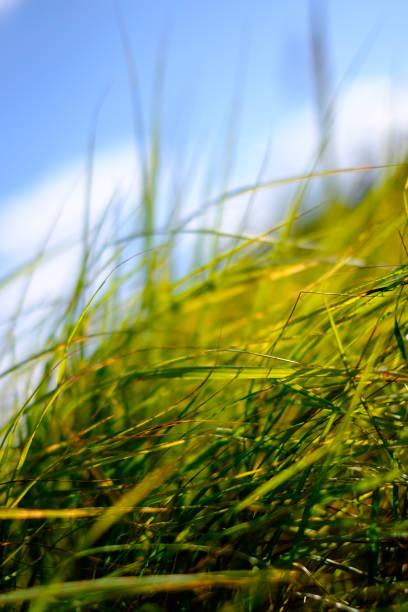잔디 및 흐린날 스카이 스톡 사진