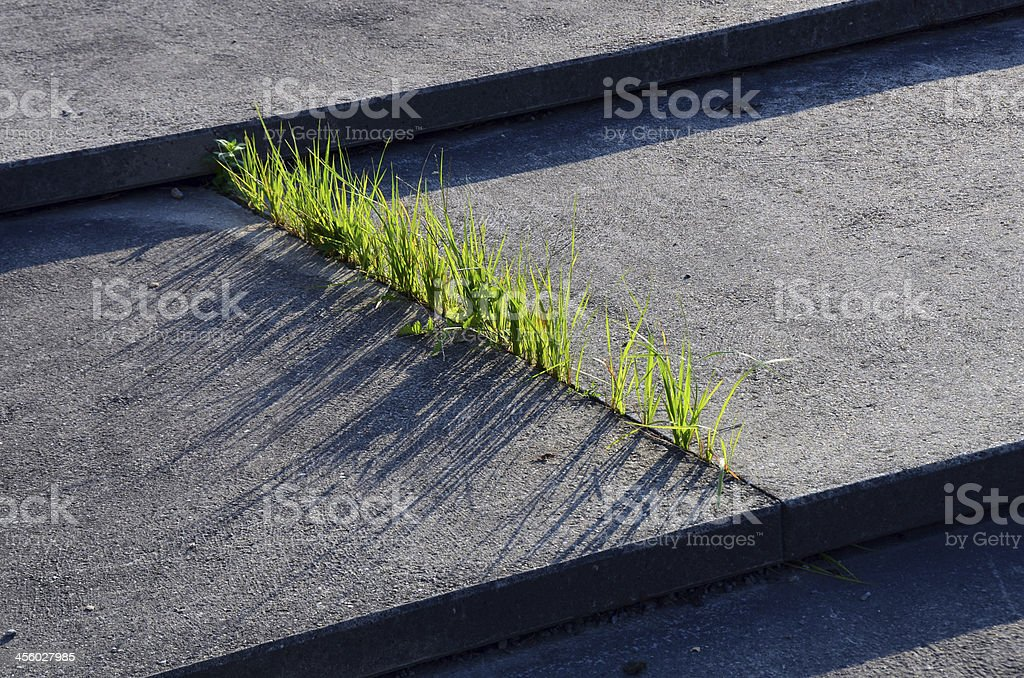 Grass and Concrete stock photo