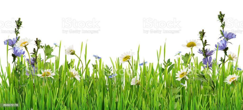 Grass und Daisy Blumen-Zeile – Foto