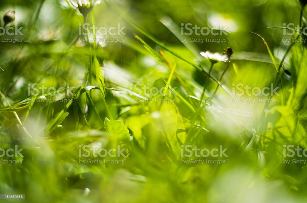 Grass and flower background. stock photo