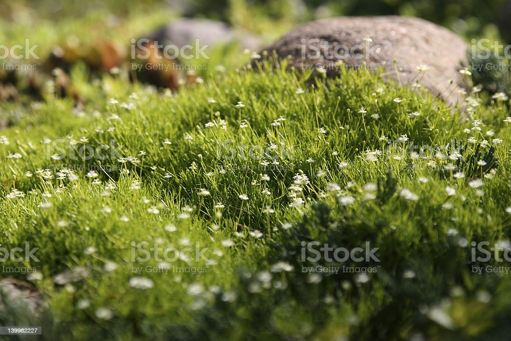 Grass and flowers carpet royalty-free stock photo