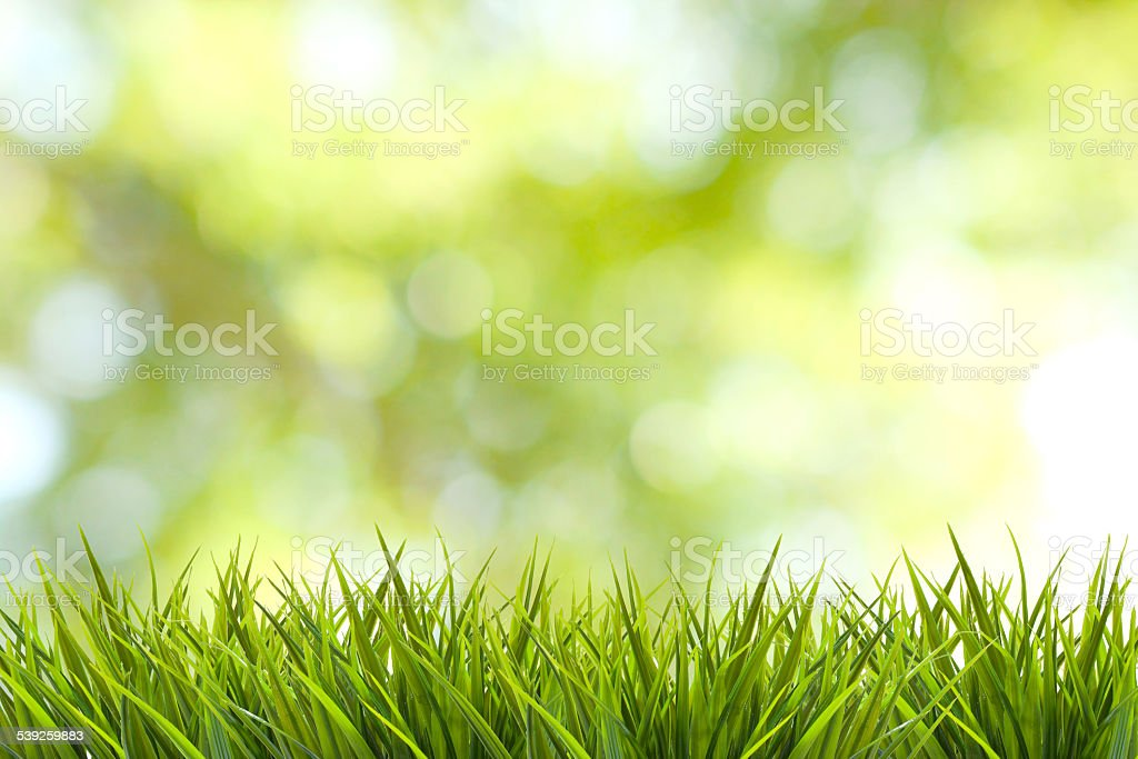Grass and green nature blurred background stock photo