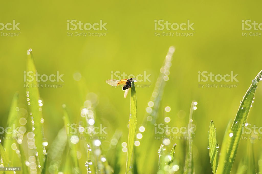 Grass and ladybird royalty-free stock photo