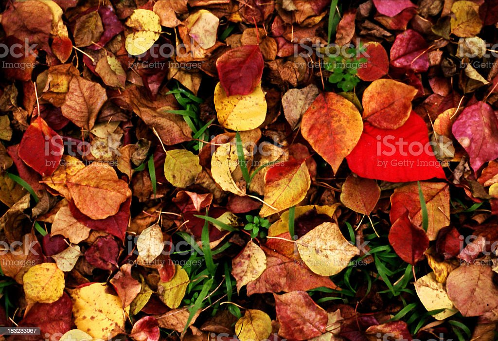 Grass and leaves royalty-free stock photo
