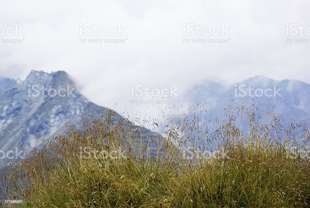 Grass and mountains stock photo