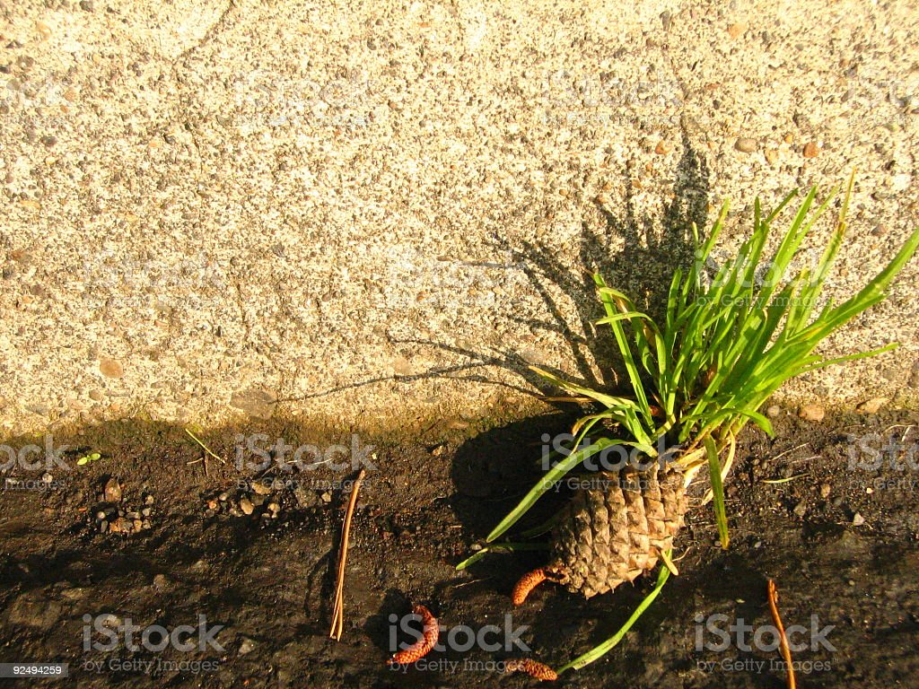 Grass and Pinecone on curb royalty-free stock photo