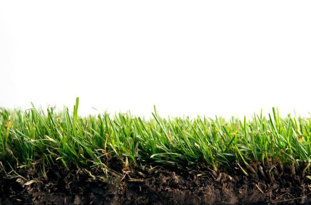 grass and roots isolated - filo d'erba foto e immagini stock
