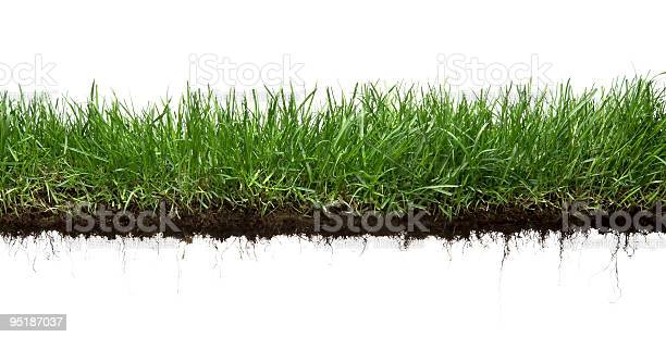 Grass and roots isolated picture id95187037?b=1&k=6&m=95187037&s=612x612&h=zof5v7kuryq6y1zsghsdnucnt0mmogo4ap9tfox1kkm=