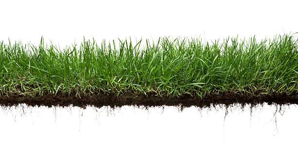 grama e roots isolado - gramado terra cultivada - fotografias e filmes do acervo
