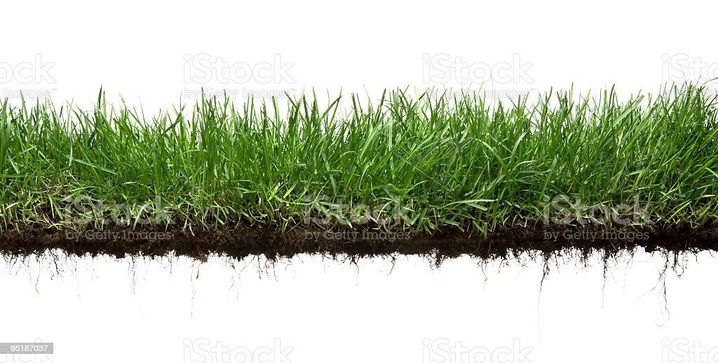 grass and roots isolated stock photo
