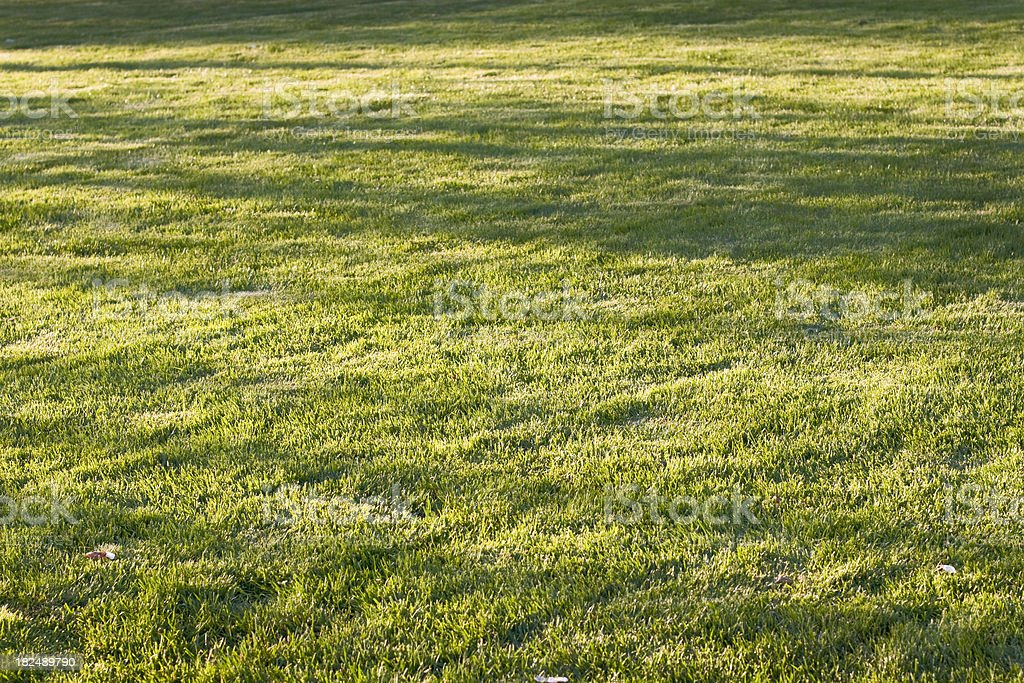 Grass and shadows royalty-free stock photo