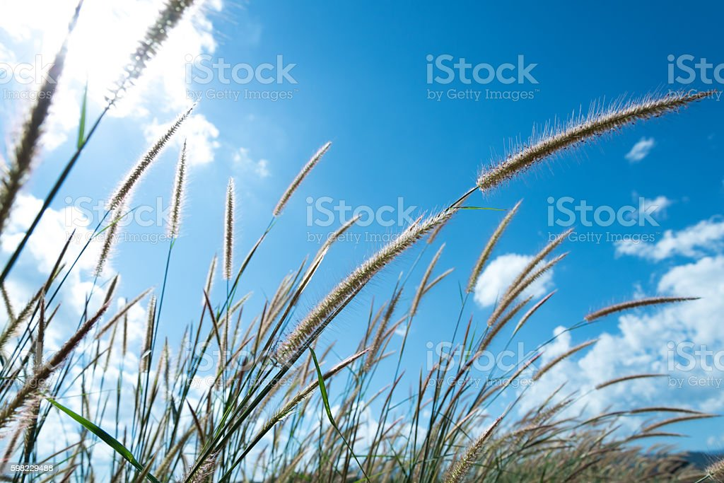 Grass and sky clouds background foto royalty-free