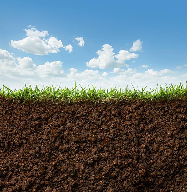 Gras und Erde – Foto